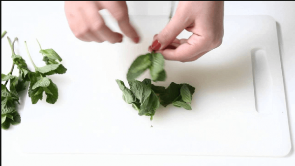 Mint leaves plucking