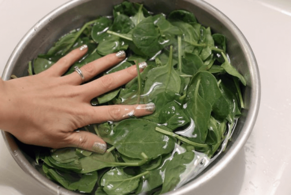 Wash Spinach in a pot